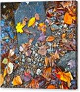 Autumn B 2015 116 Acrylic Print