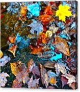 Autumn B 2015 124 Acrylic Print