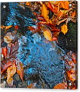Autumn B 2015 183 Acrylic Print
