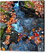 Autumn B 2015 186 Acrylic Print