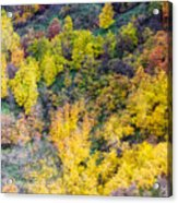 Autumn Background  Acrylic Print