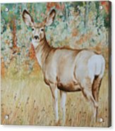Autumn Beauty- Mule Deer Doe  Acrylic Print