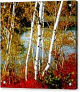 Autumn Birch Lake View Acrylic Print