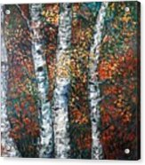 Autumn Birch Acrylic Print