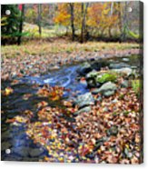 Autumn Birch River Acrylic Print