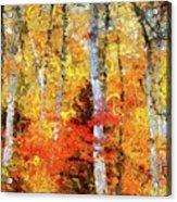 Autumn Birches Acrylic Print