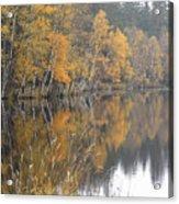Autumn Birches On The Shore Of Lake Acrylic Print