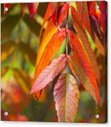 Autumn Bliss Acrylic Print