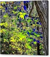 Autumn Blue  Acrylic Print