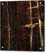 Autumn Branch Acrylic Print