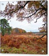 Autumn Brunch Acrylic Print