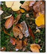 Autumn Carpet 001 Acrylic Print