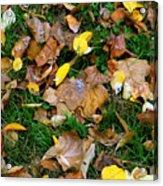 Autumn Carpet 002 Acrylic Print