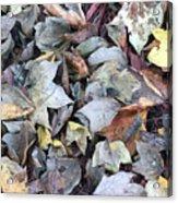 Autumn Carpet II Acrylic Print