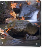 Autumn Cascades Acrylic Print