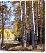 Autumn Chama New Mexico Acrylic Print