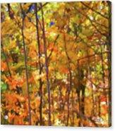 Autumn Colored Acrylic Print