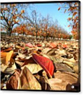 Autumn Colors 04 Acrylic Print