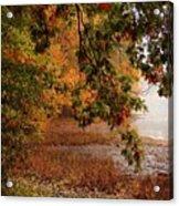 Autumn Colors 37 Acrylic Print