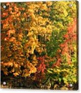 Autumn Colors II Acrylic Print