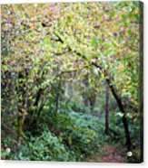 Autumn Colors In The Forest Acrylic Print
