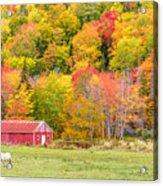 Autumn Colors Near Lake Ainslie  Acrylic Print