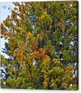 Autumn Colours Acrylic Print