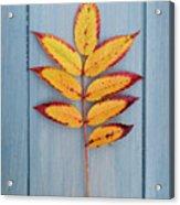 Autumn Colours On Blue Acrylic Print