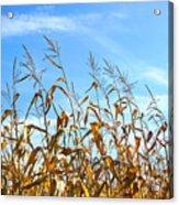 Autumn Corn Acrylic Print by Sandra Cunningham