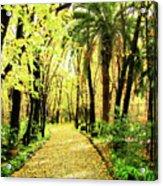 Autumn Corridor Acrylic Print