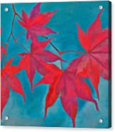 Autumn Crimson Acrylic Print by William Jobes