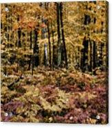 Autumn Dampness Acrylic Print