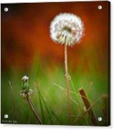 Autumn Dandelion Acrylic Print