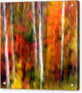Autumn Dreams Acrylic Print