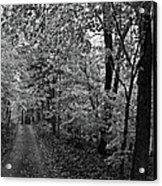 Autumn Drive Bnw Acrylic Print
