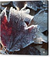 Autumn Ends, Winter Begins 2 Acrylic Print
