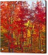 Autumn Experience Acrylic Print