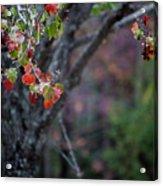 Autumn Fade Acrylic Print