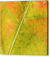 Autumn Fall Colours 1 Acrylic Print