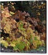 Autumn Ferns Acrylic Print