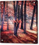 Autumn Firelight Acrylic Print