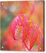 Autumn Fires Acrylic Print