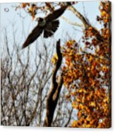Autumn Flight Acrylic Print