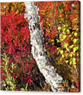 Autumn Foliage In Finland Acrylic Print