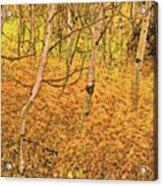 Autumn Foliage Lc Acrylic Print
