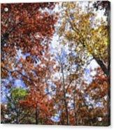 Autumn Forest Canopy Acrylic Print