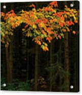 Autumn Forest Leaves Acrylic Print
