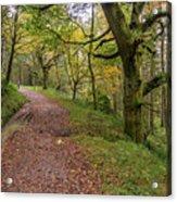 Autumn Forest Path - Acrylic Print