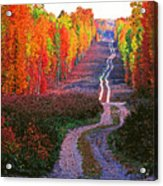 Autumn Forest Track Acrylic Print