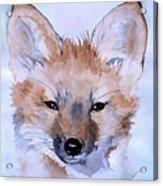 Autumn Fox Acrylic Print